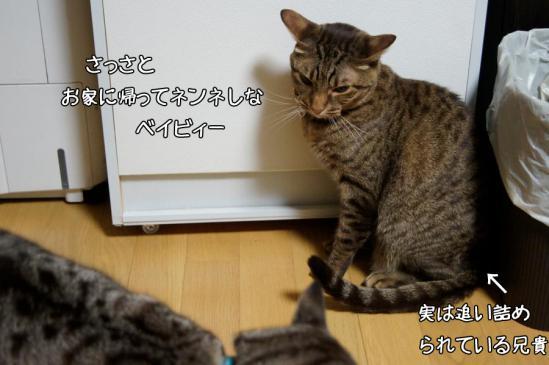 4_20121018080449.jpg