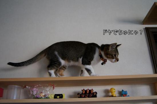 4_20121024083813.jpg