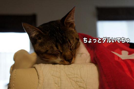4_20121117075146.jpg