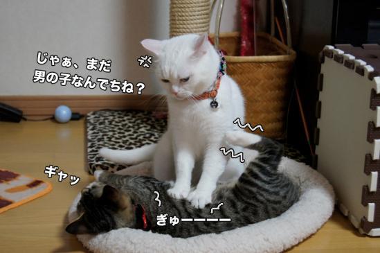 4_20121127195427.jpg