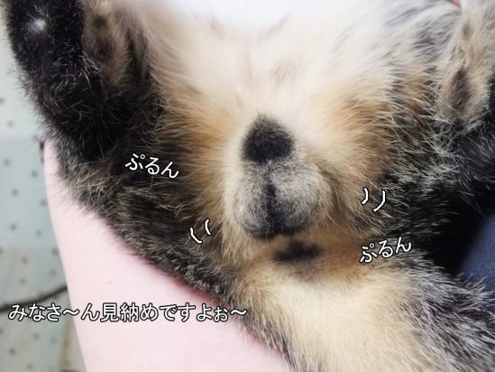4_20121212012741.jpg