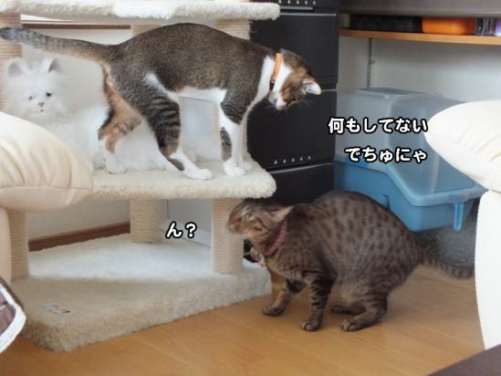 4_20121219083550.jpg