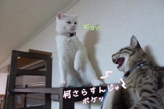 5_20120307100805.jpg