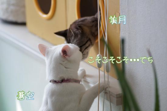 5_20120316000200.jpg