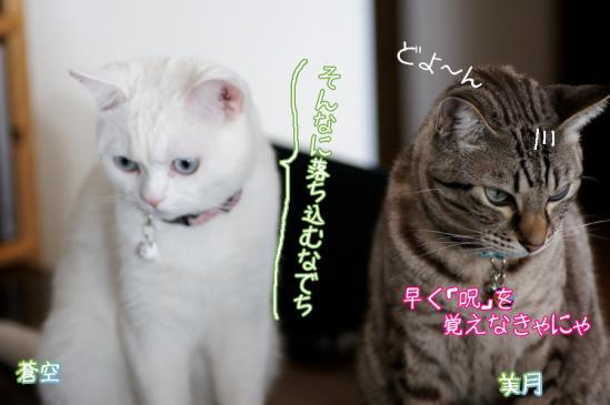 5_20120320000941.jpg
