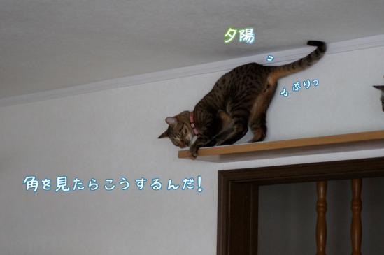 5_20120324084739.jpg