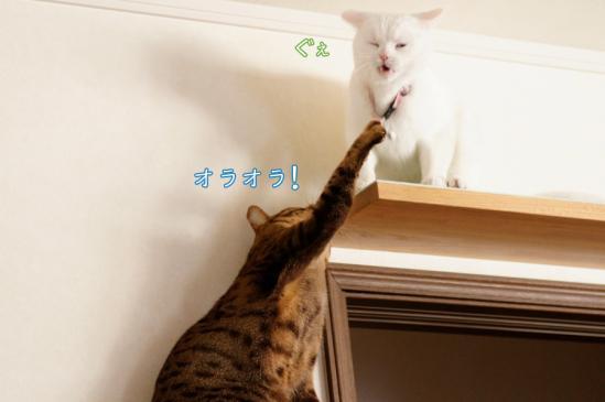 5_20120330074631.jpg