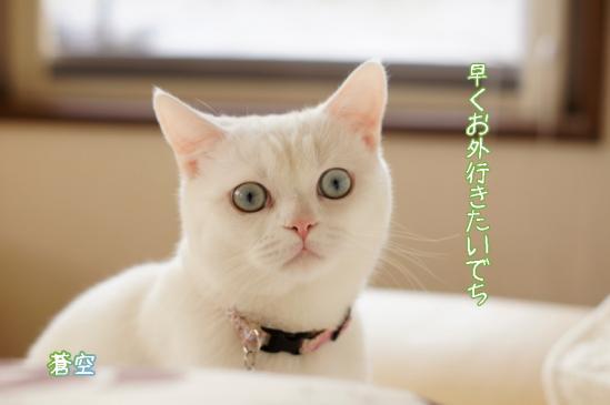 5_20120411071911.jpg