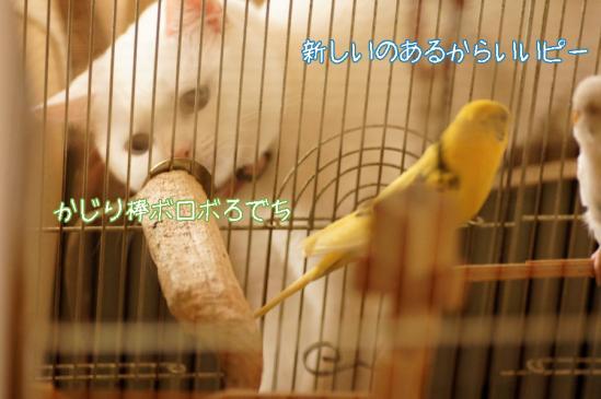 5_20120414082916.jpg