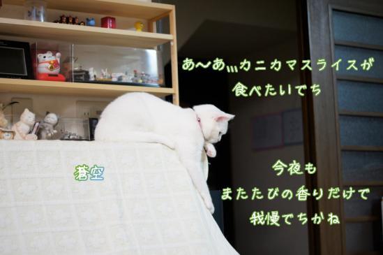 5_20120416231310.jpg