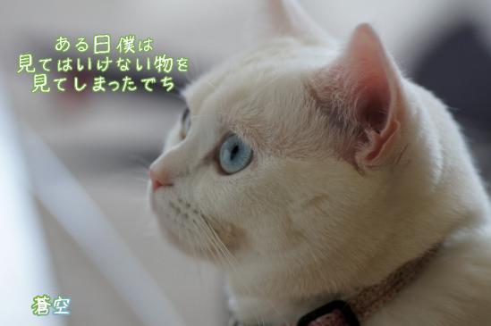 5_20120419081223.jpg