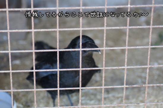 5_20120504231935.jpg