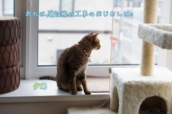 5_20120508072702.jpg