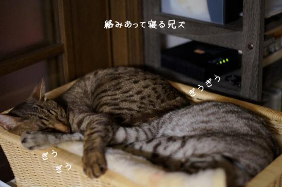 5_20120527075610.jpg