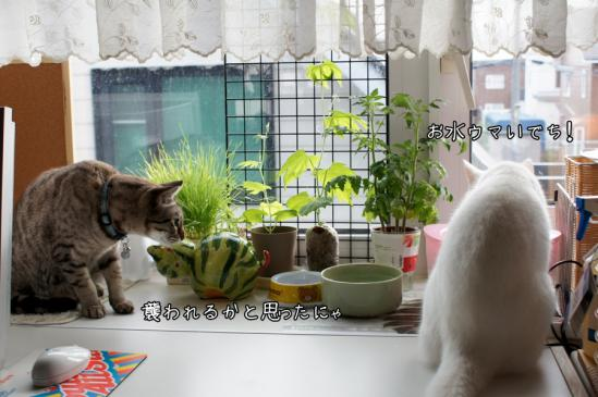 5_20120710080027.jpg