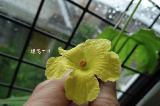 5_20120712123855.jpg
