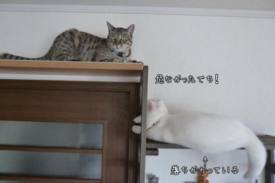 5_20120718064627.jpg