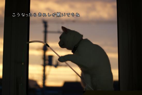 5_20120809231855.jpg