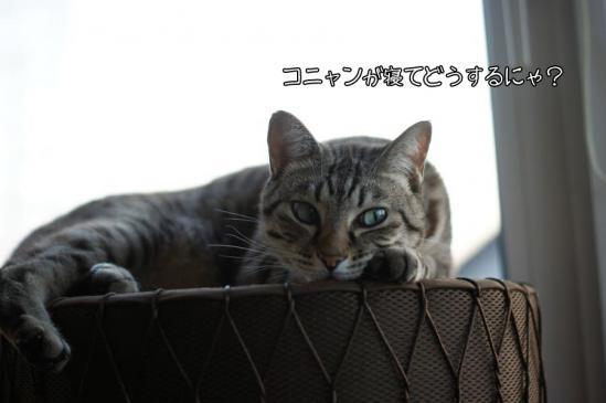 5_20121016223402.jpg