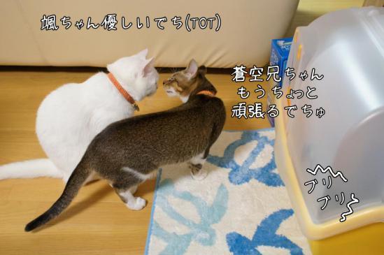 5_20121111011548.jpg