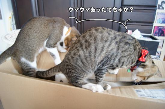 5_20121123083537.jpg