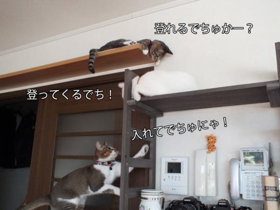 5_20121215082745.jpg