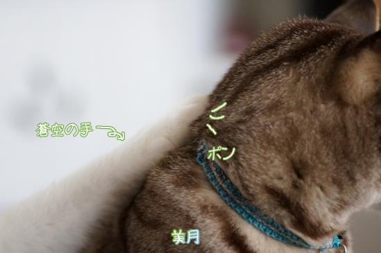 6_20120320000348.jpg
