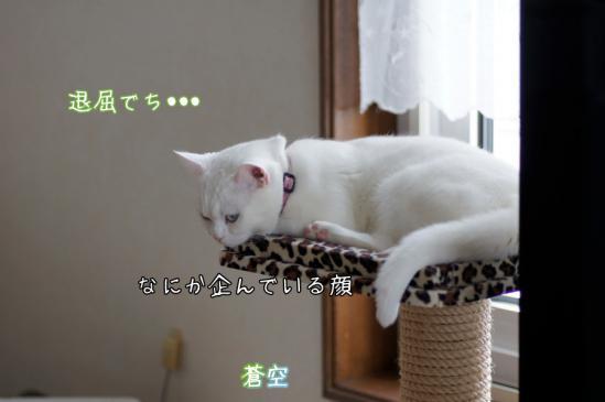 6_20120325091711.jpg