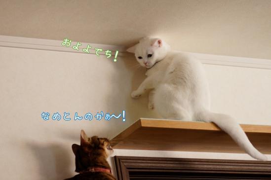 6_20120330074630.jpg