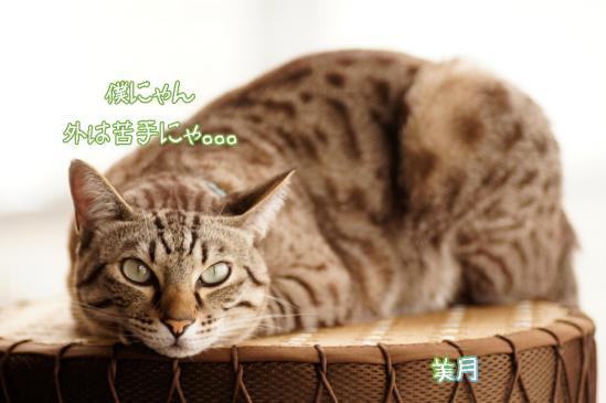 6_20120411071910.jpg