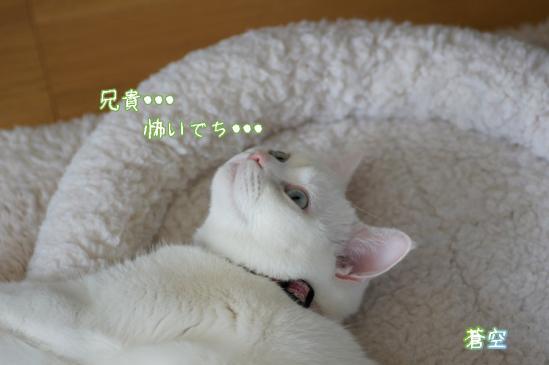 6_20120419081221.jpg