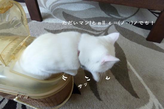 6_20120612115600.jpg