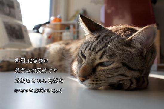 6_20120626070724.jpg