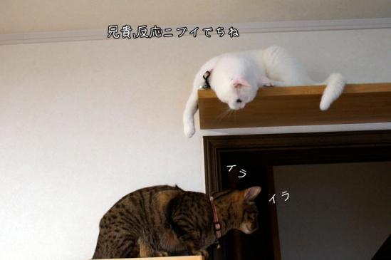 6_20120807083010.jpg
