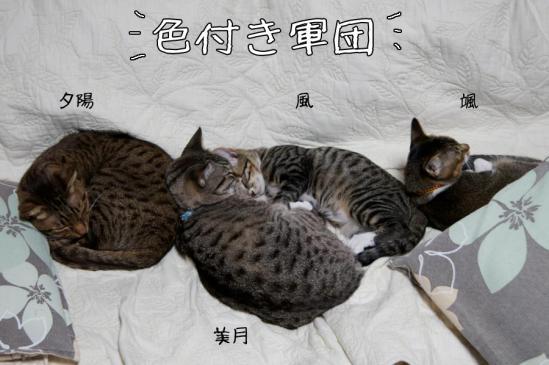 6_20121013110627.jpg
