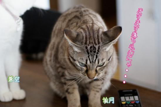 7_20120320000313.jpg