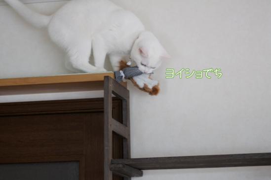 7_20120321233609.jpg