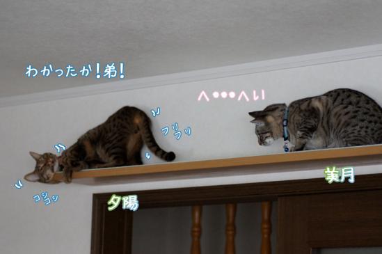 7_20120324084644.jpg