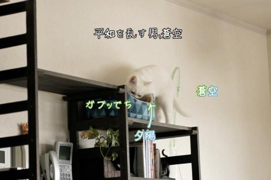 7_20120325091710.jpg