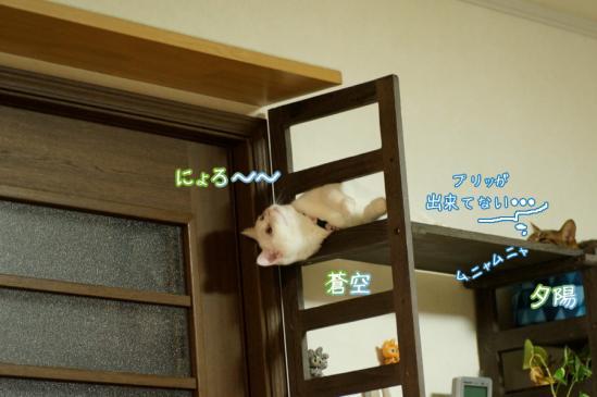 7_20120325230643.jpg