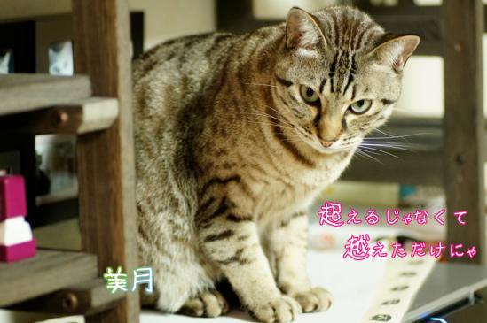 7_20120329085019.jpg