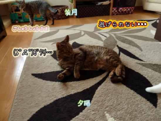 7_20120506225331.jpg