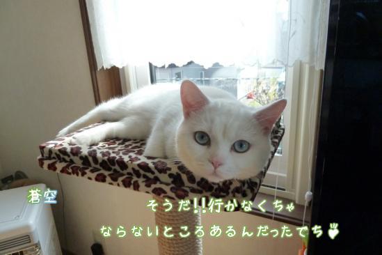 7_20120518074719.jpg