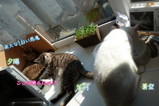 7_20120521070150.jpg