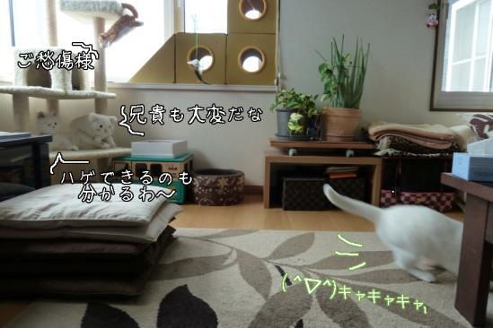 7_20120522081729.jpg