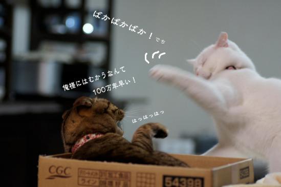 7_20120614073232.jpg