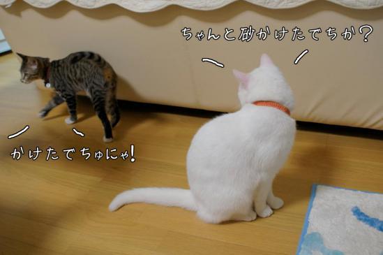 7_20121111010424.jpg