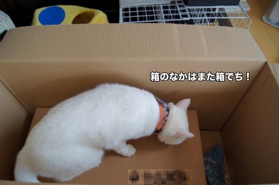 7_20121123083437.jpg