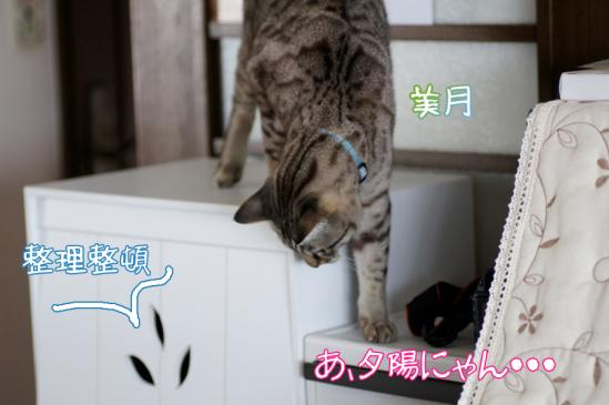 8_20120312110421.jpg