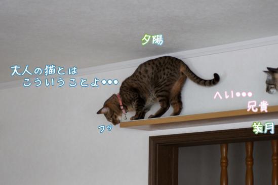 8_20120324084643.jpg